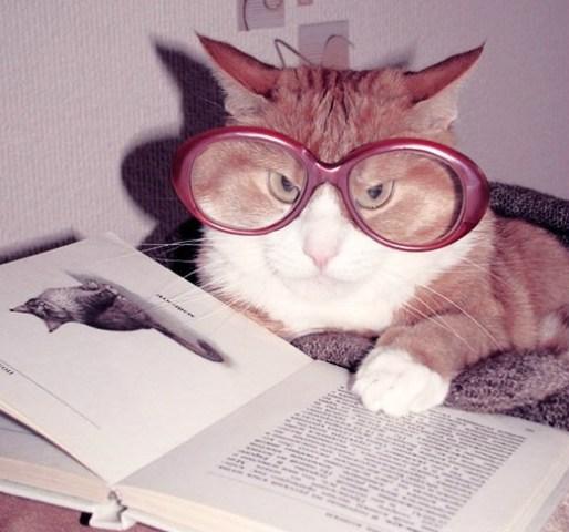 cat-reading-kedi-kitap-okuyor-46