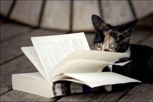 cat-reading-kedi-kitap-okuyor-7
