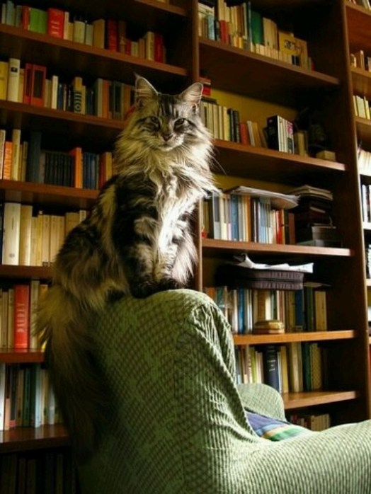 cats-and-books-4