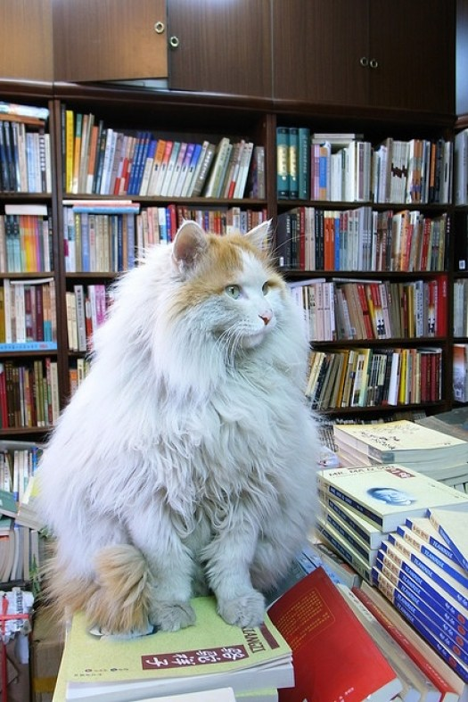 cats-and-books