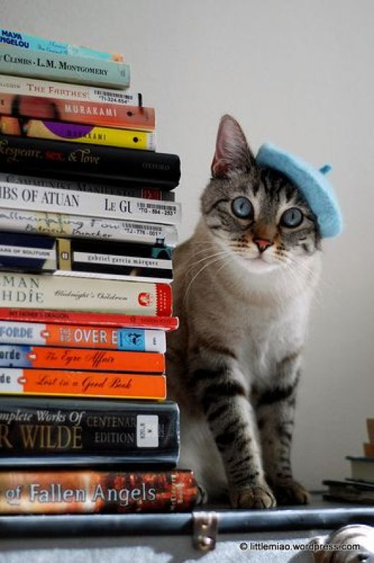 happy-cat-and-books