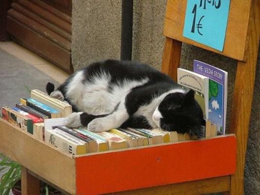 kitap-kedi-books-cats-4