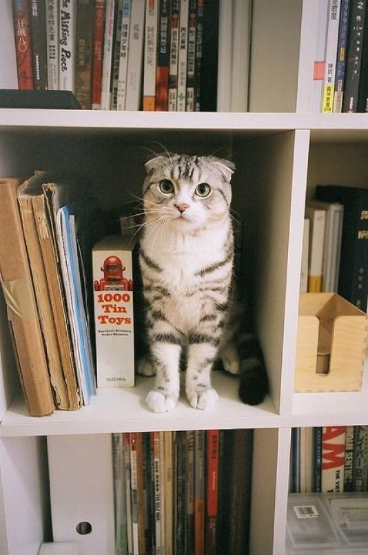 kitty-reading-kedi-kitap-okuyor-33