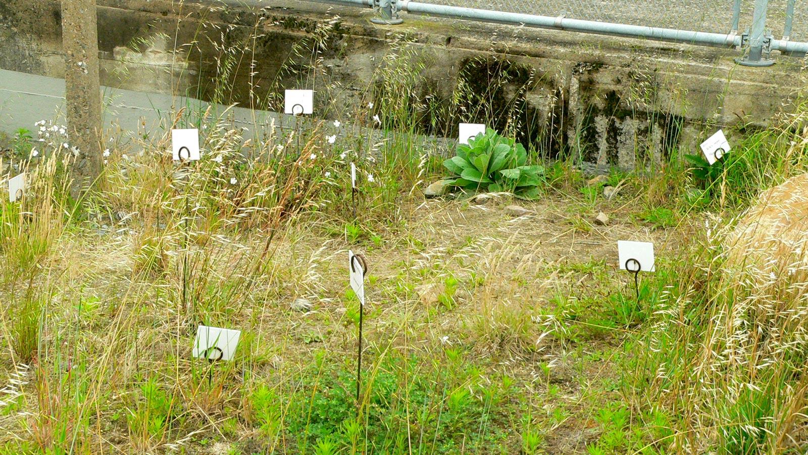 Eskis paysagistes jardins du tiers paysage for Paysage de jardin