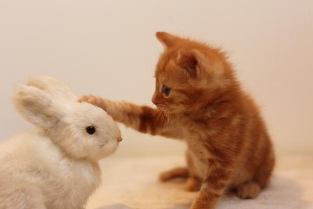 猫ちゃんからのプレゼント