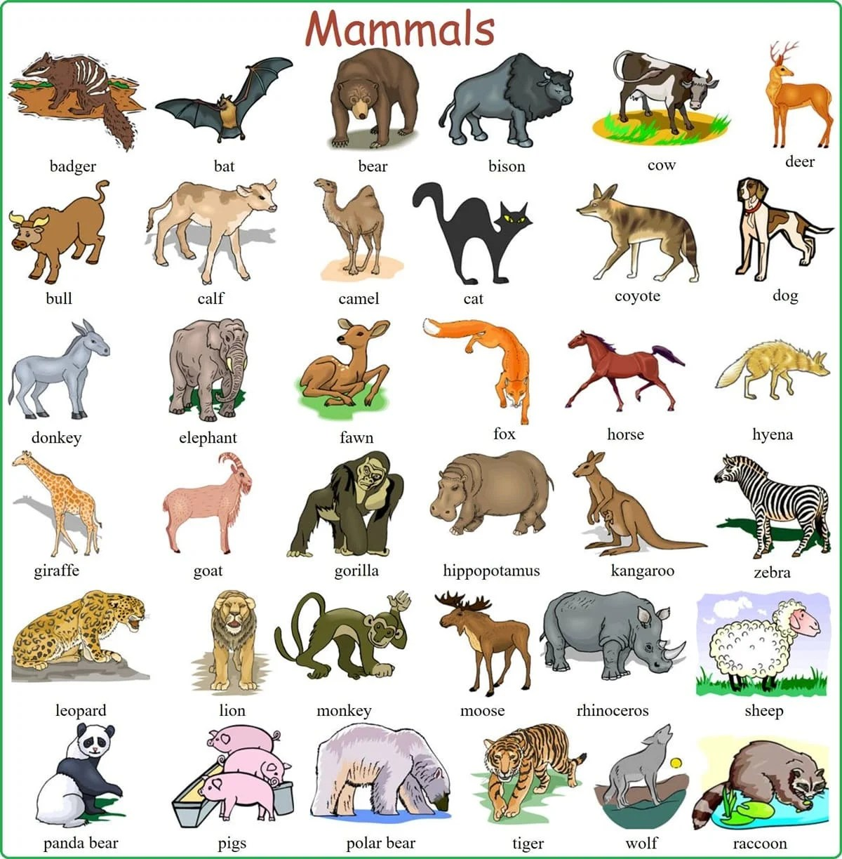 Learn English Vocabulary Through Pictures 100 Animal
