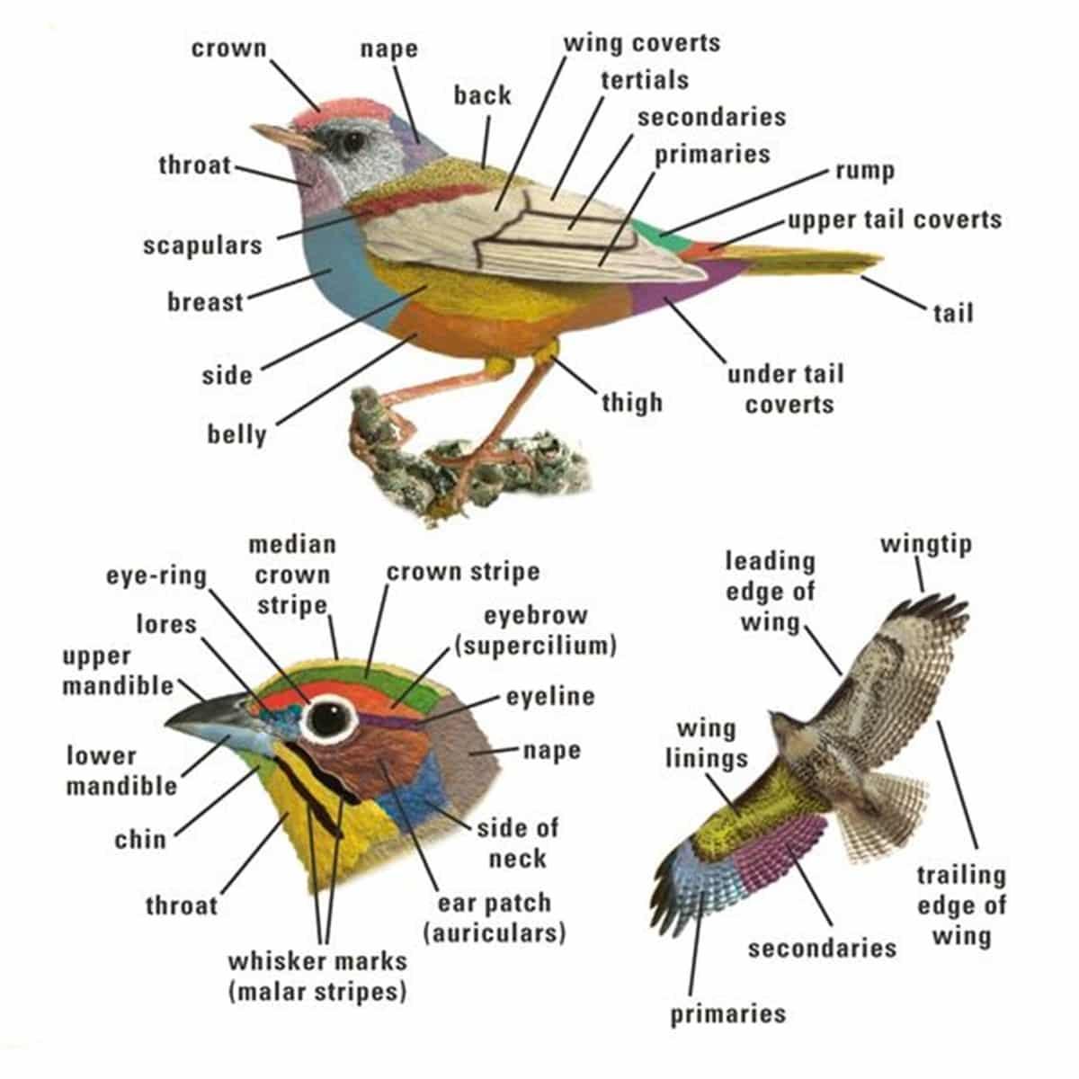 Animal Body Parts Vocabulary In English