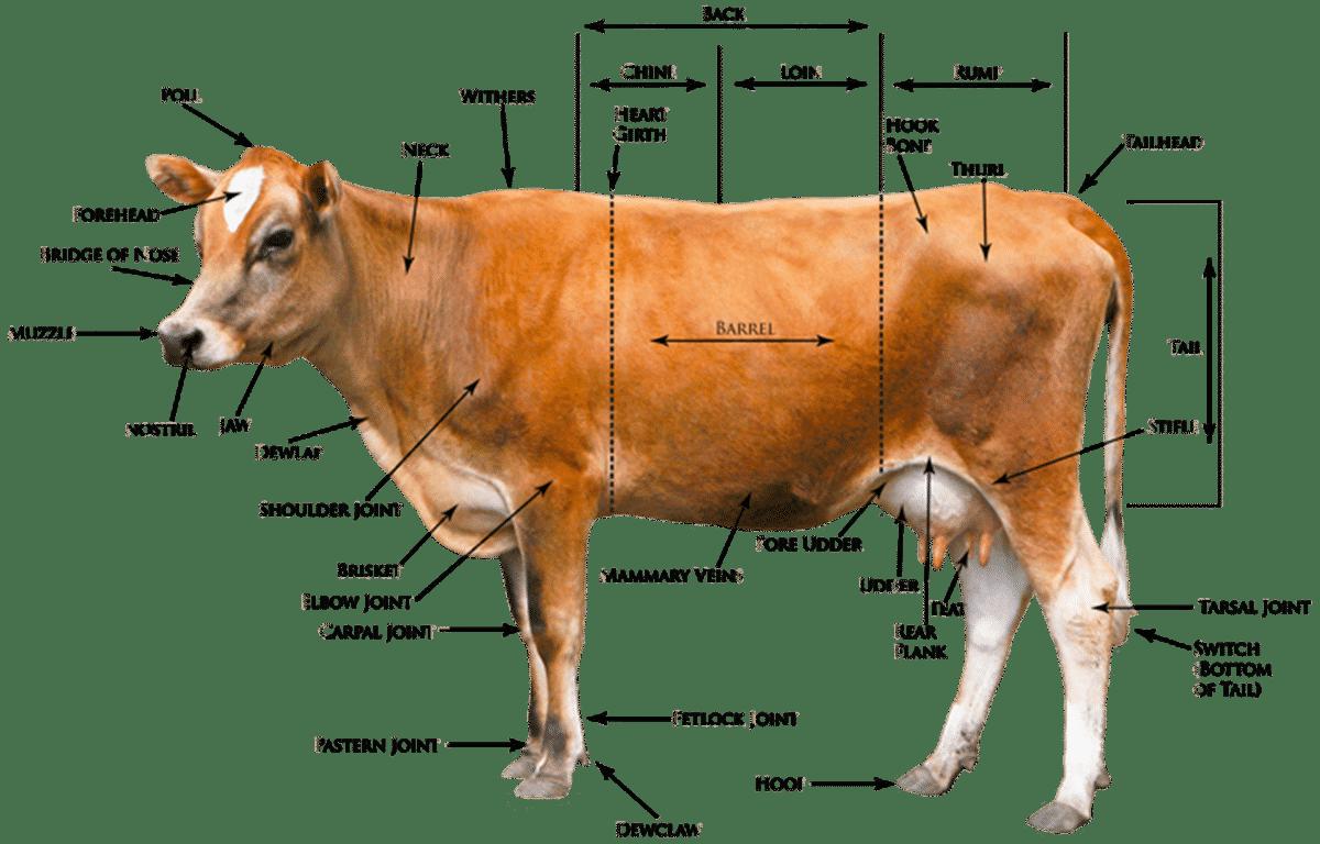 """Animal Body Parts"" Vocabulary in English 15"