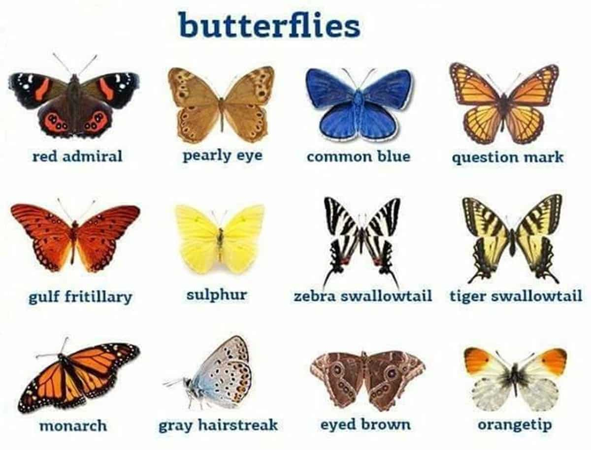 Insects Vocabulary in English 16