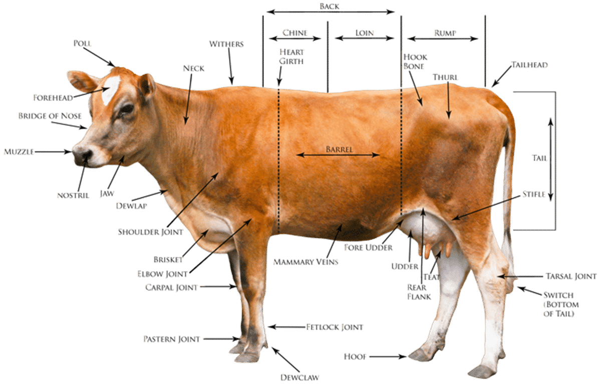 Farm/ Domestic Animals Vocabulary in English 5