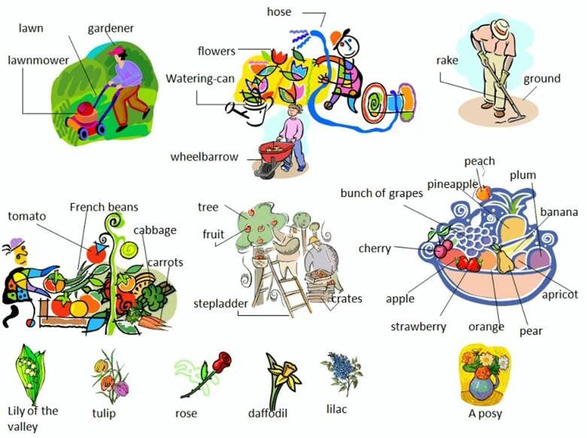 In the Garden Vocabulary 4