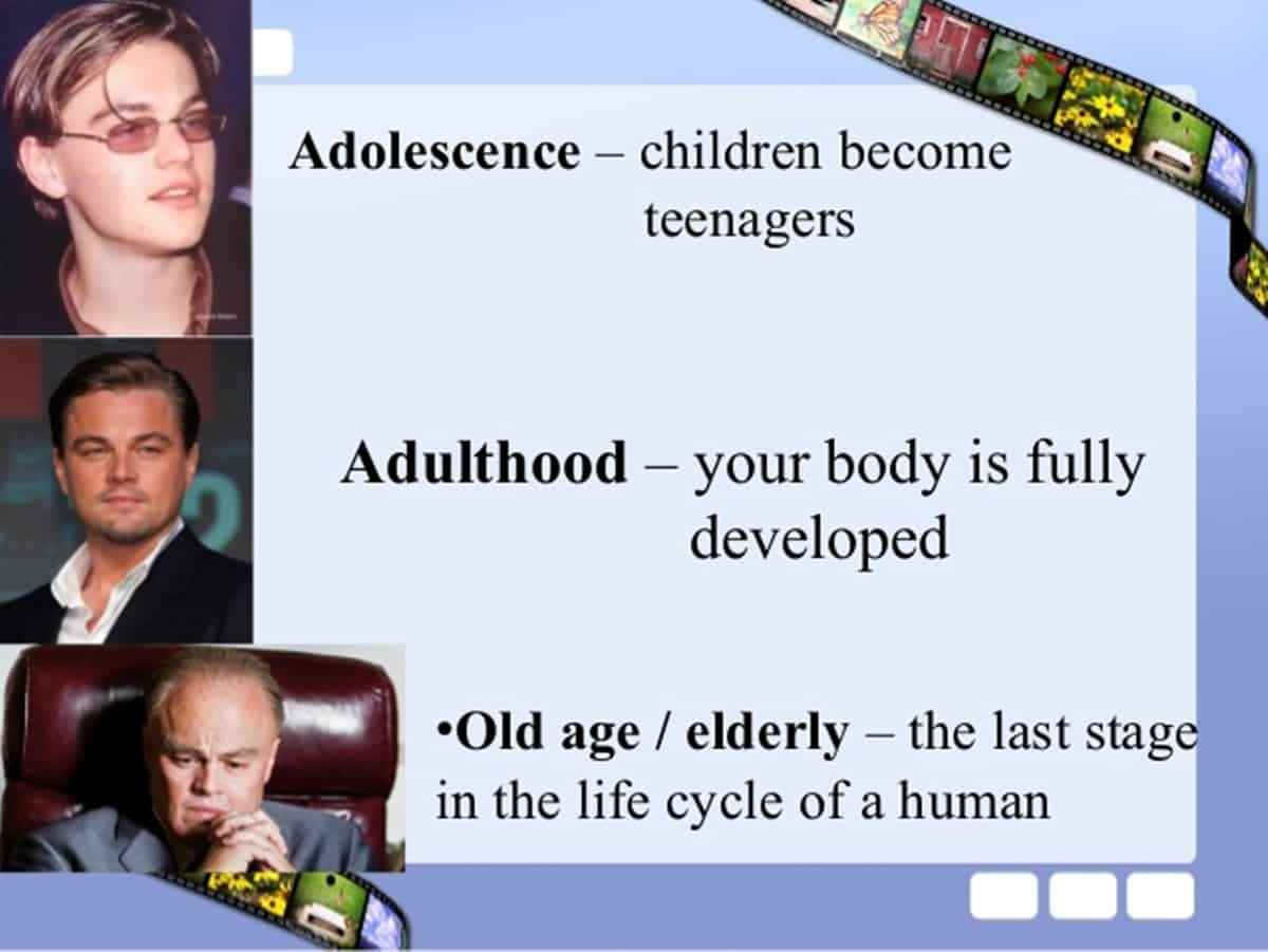 Human Life Cycle Vocabulary In English