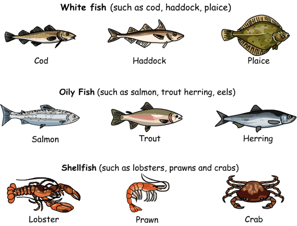 Meat Poultry And Seafood Vocabulary