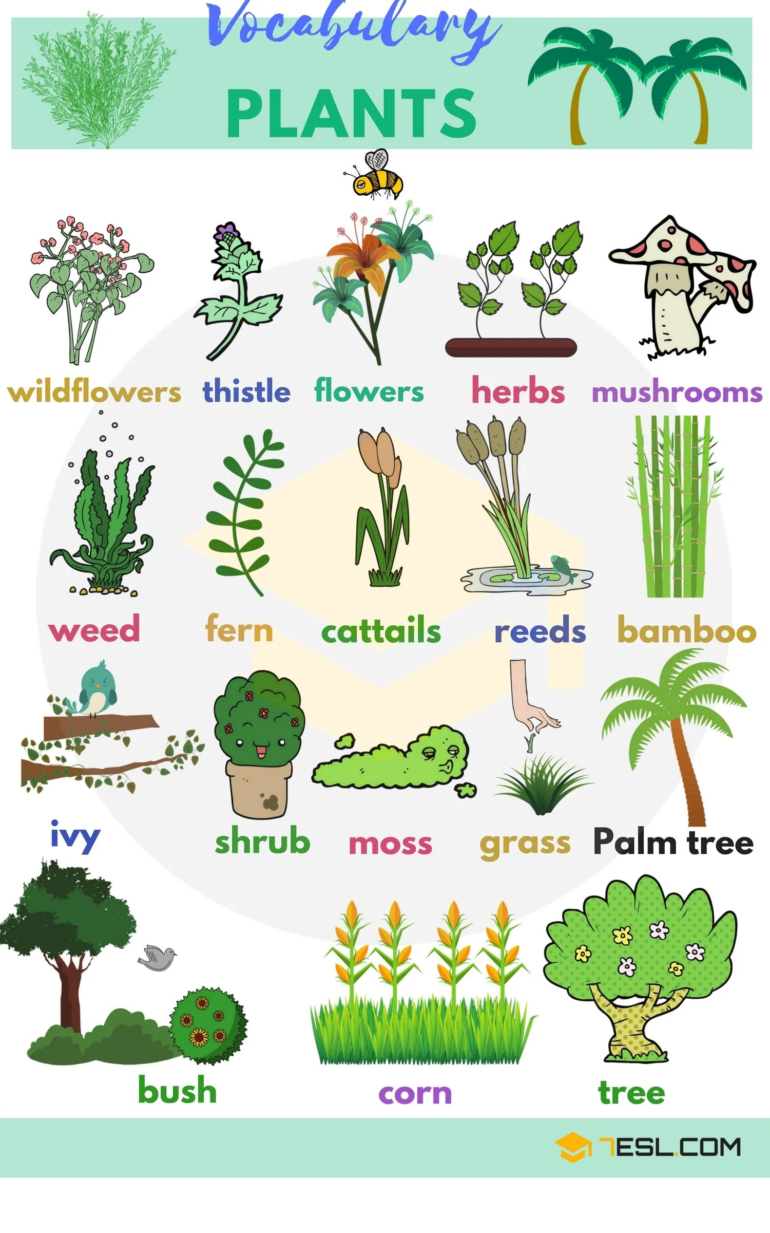 English Vocabulary For Plants
