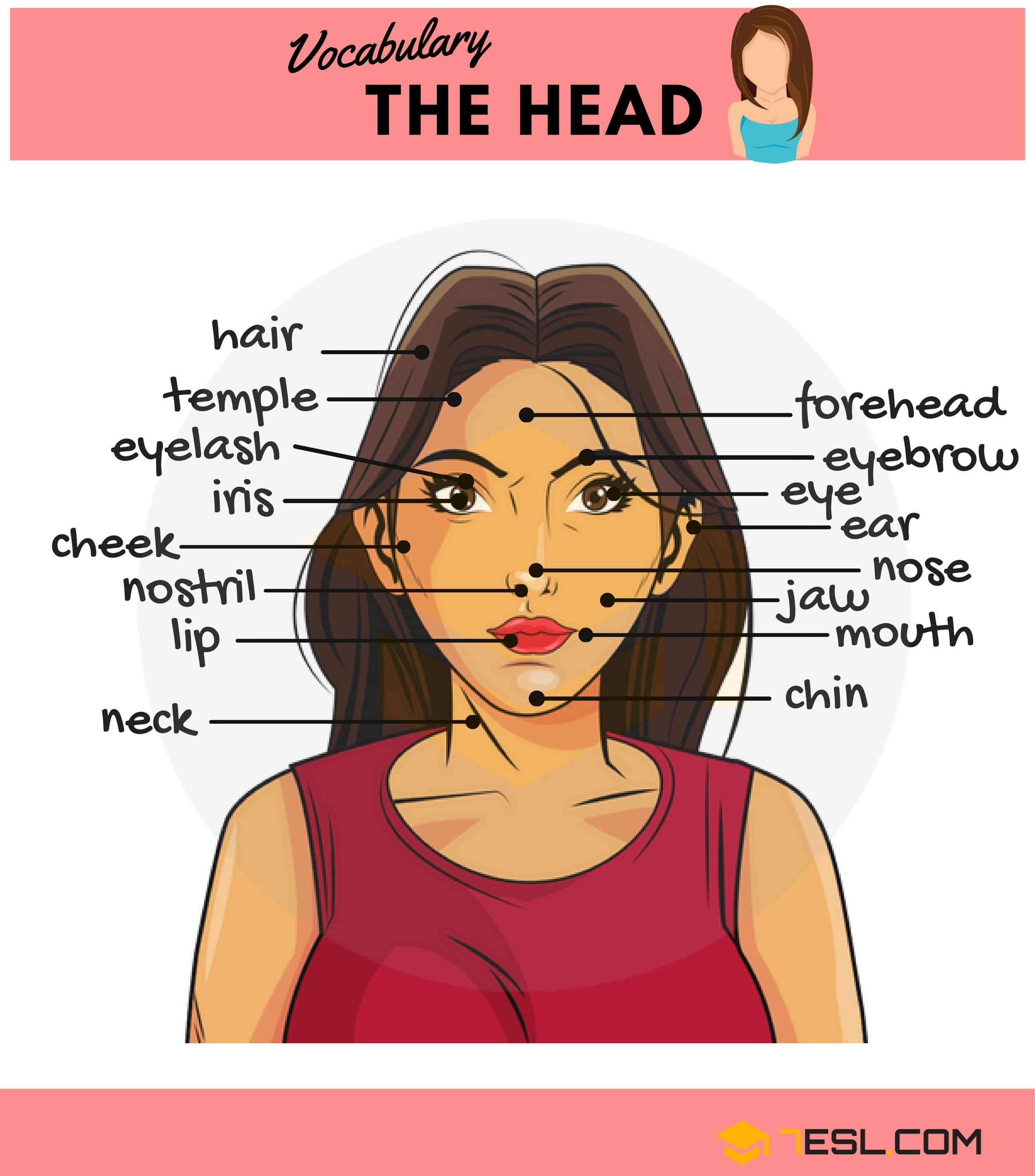Worksheet Of Parts Of Face