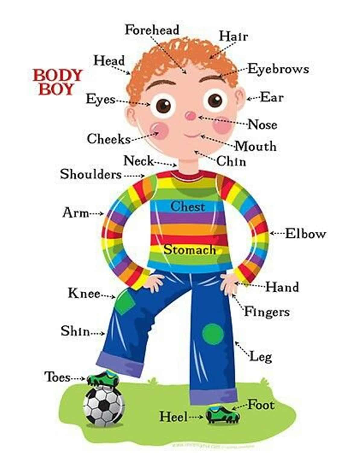 Human Body Parts Let S Explore The Human Body