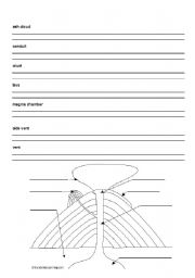 English Worksheets Parts Of A Volcano