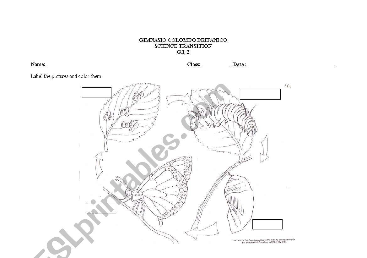 English Worksheets Butterfly Cycle