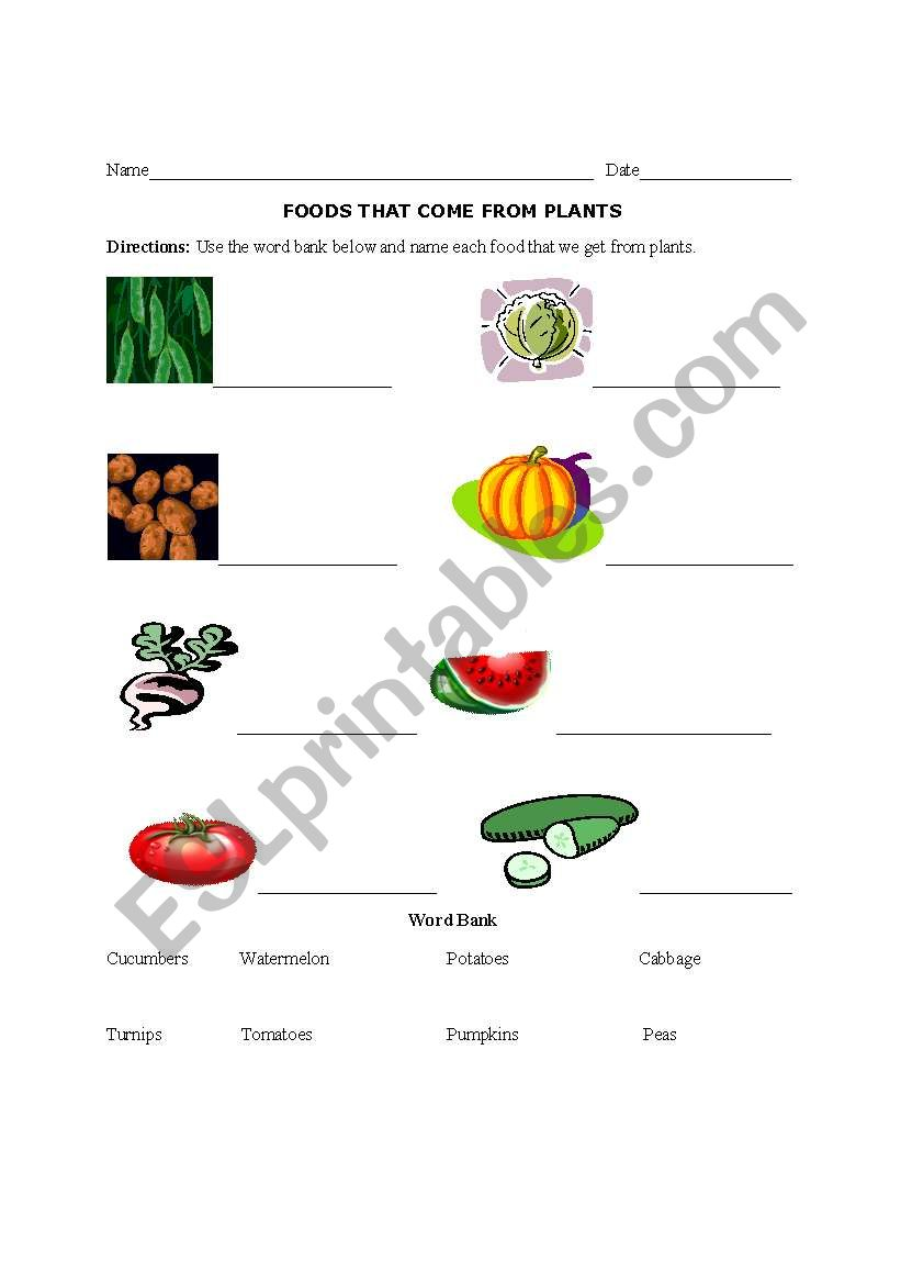 English Worksheets Foods We Get From Plants