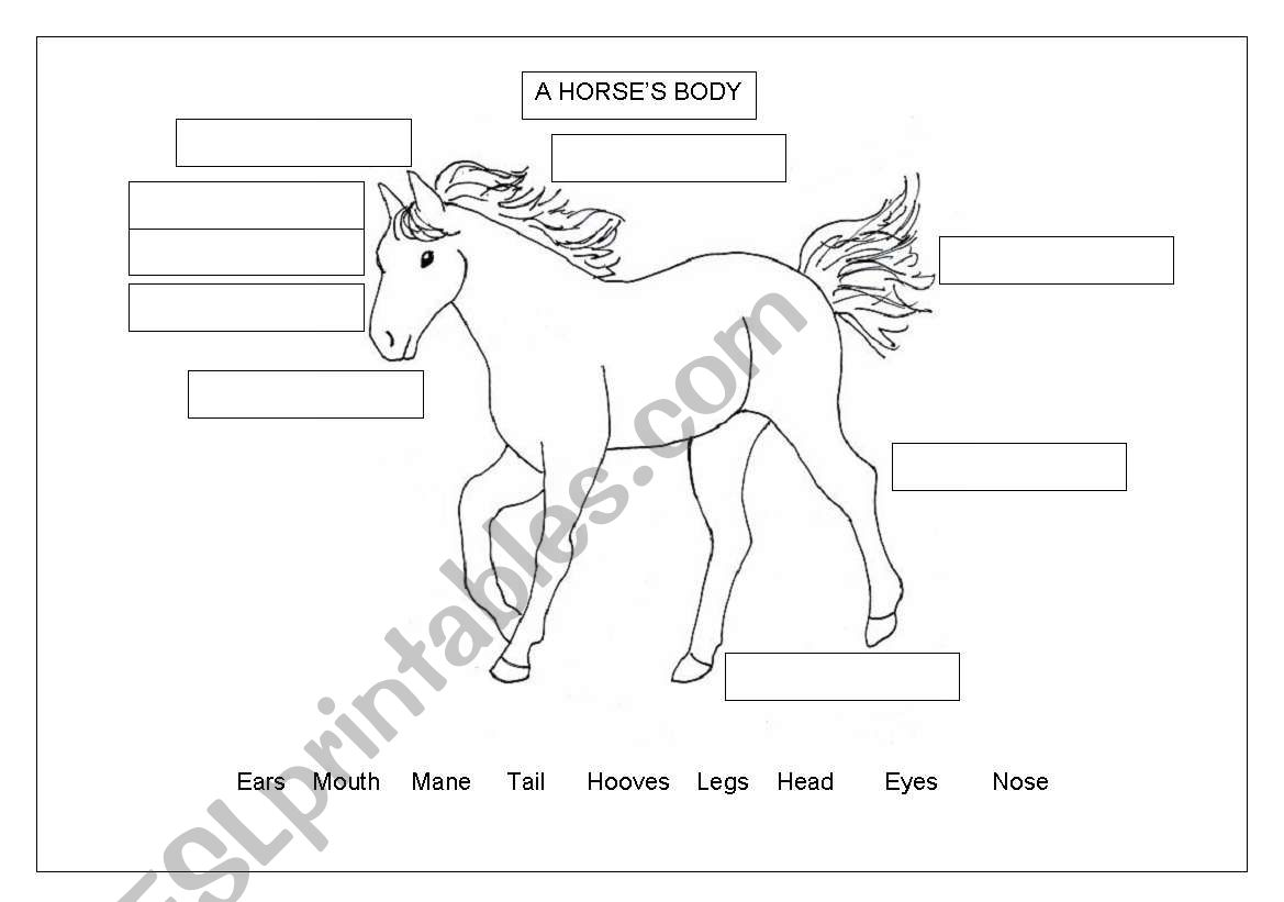 English Worksheets Horse S Body