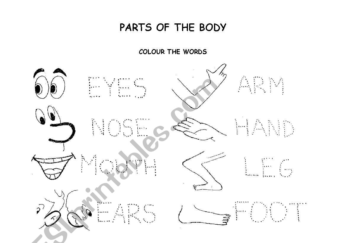 My Body Glossary