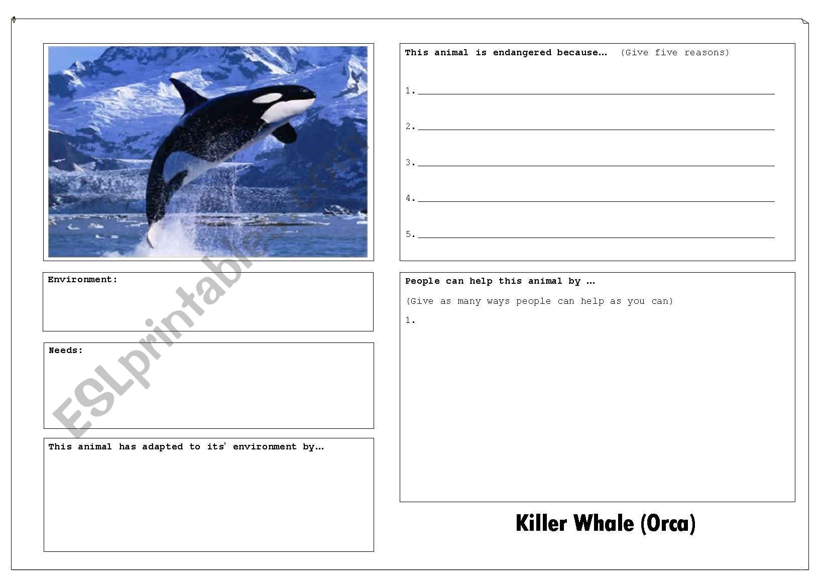 Endangered Animal Factfind Worksheets