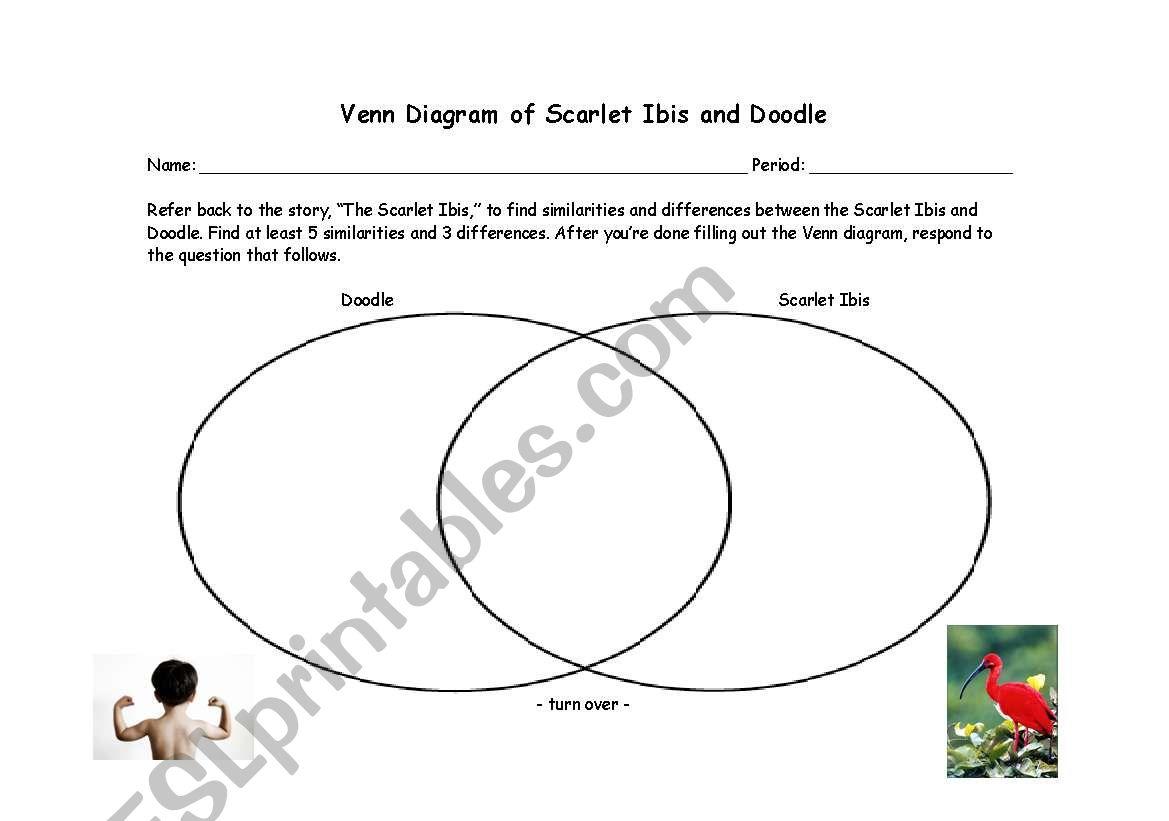 English Worksheets Scarlet Ibis Venn Diagram