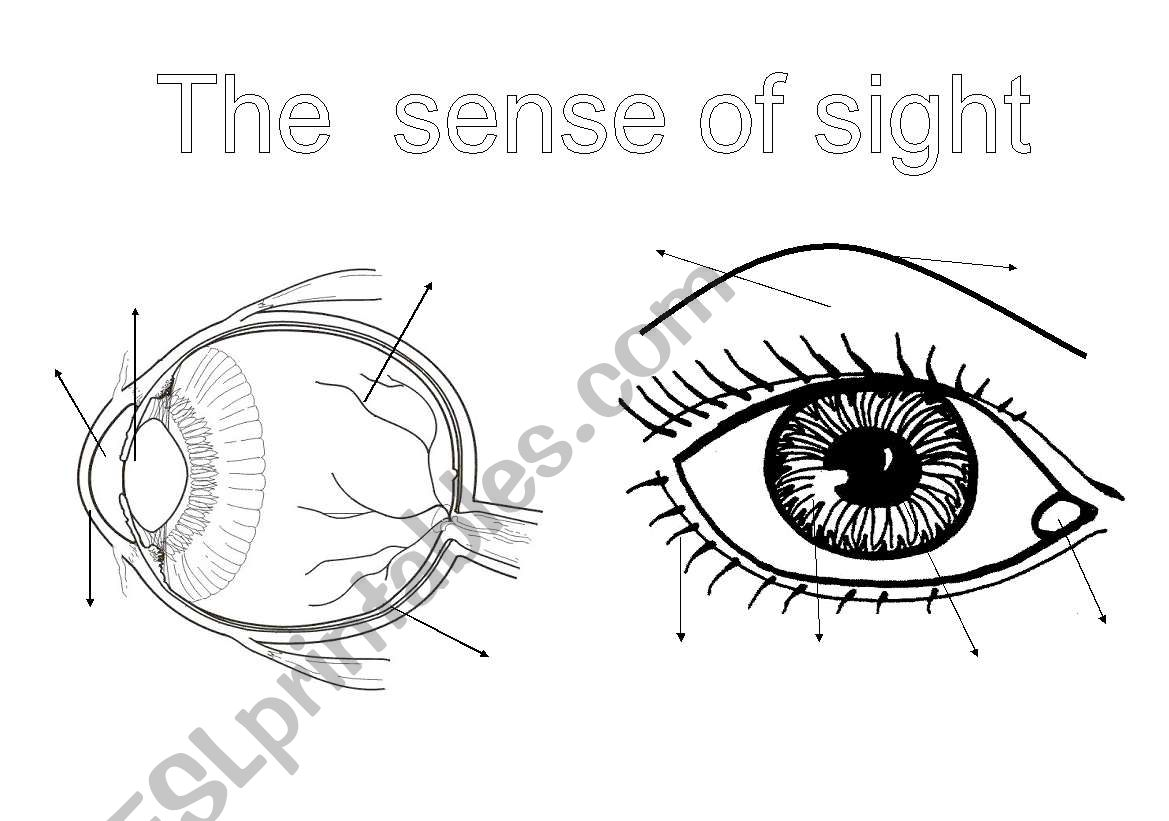 The Senses 1 The Sight