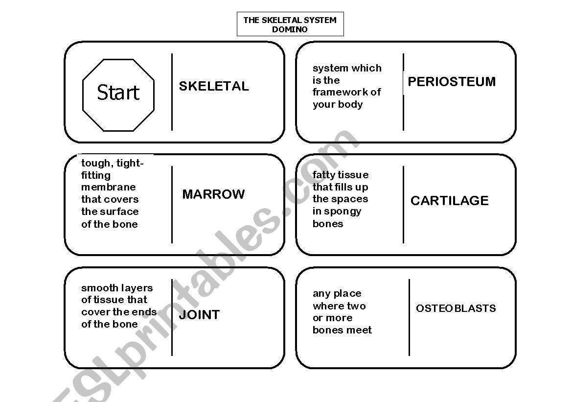 English Worksheets Skeletal System Domino 1