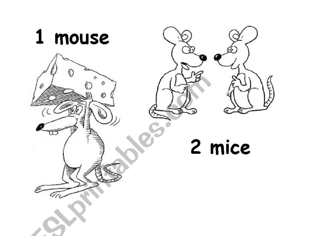 Plural Nouns 6