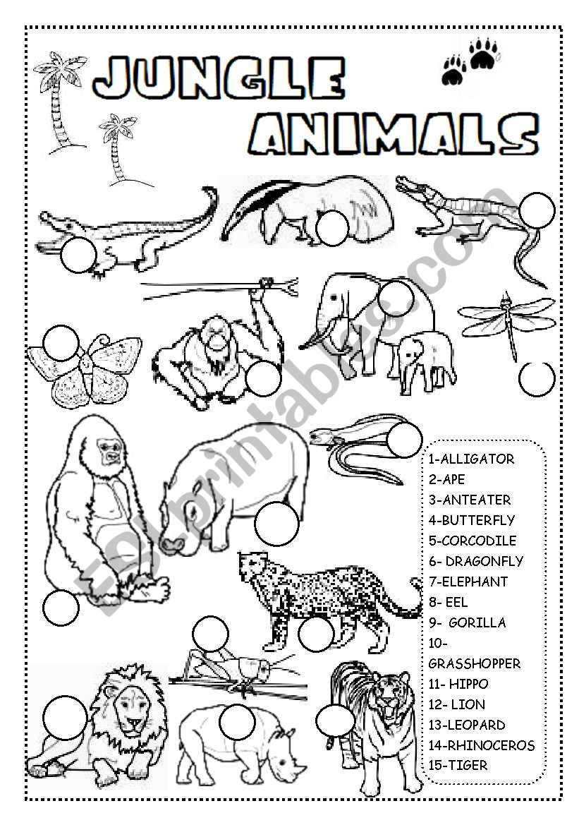 Gambar Jungle Animals Worksheet Esl Worksheet By Ineta Jpeg Png Gif