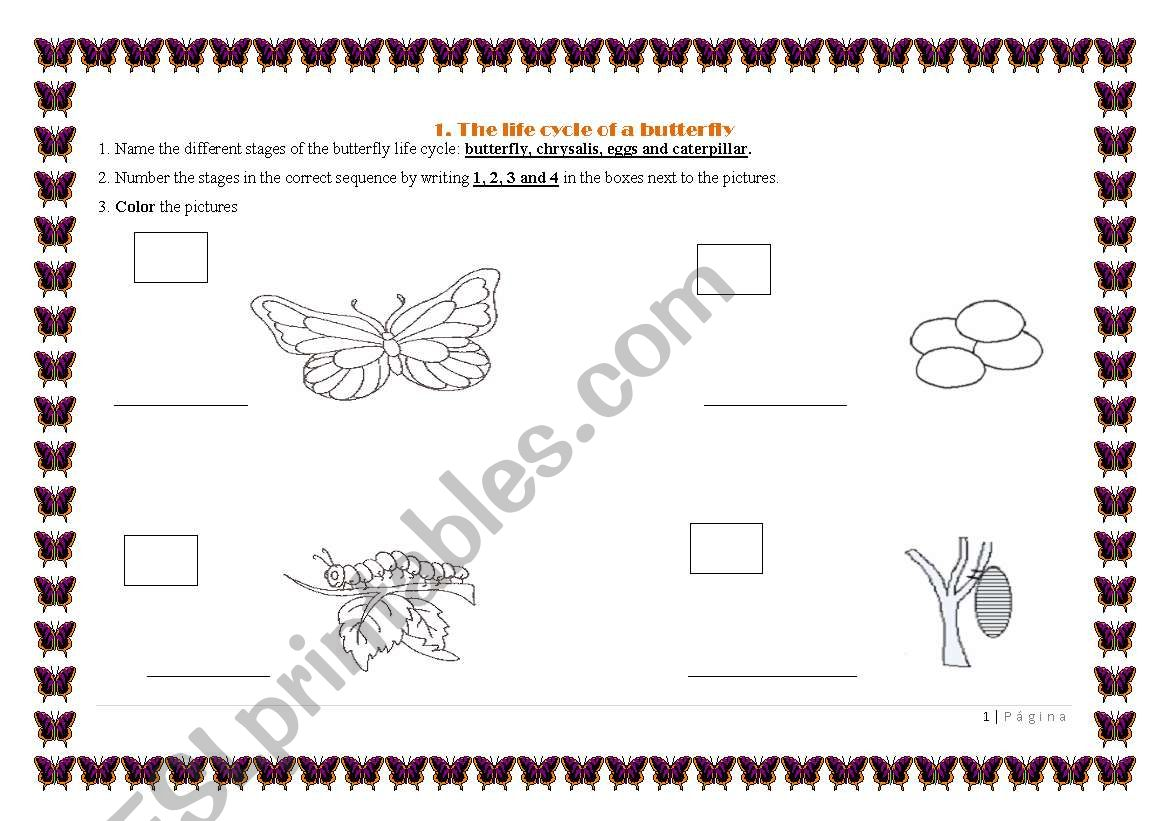 English Worksheets Life Cycle Of The Butterfly