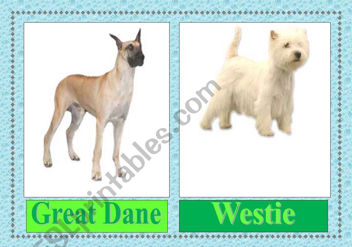 English Worksheets Dog Breeds Flashcards 3 3