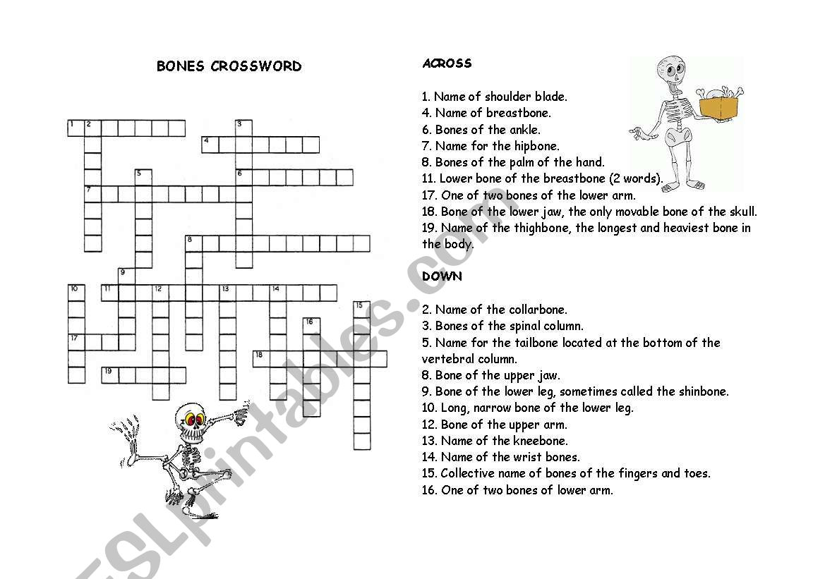 English Worksheets Bones Crossword