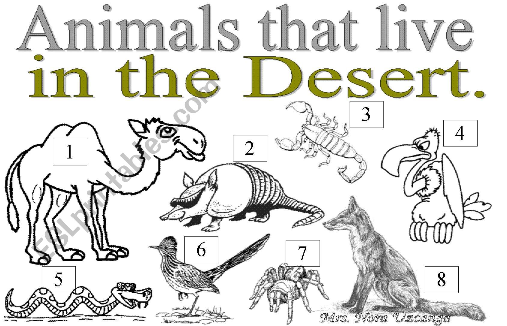 Animals Yhat Live In The Desert