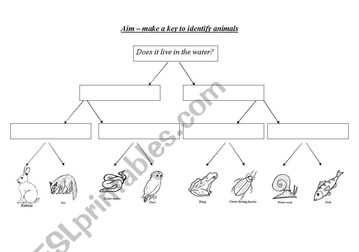 English Worksheets Create Keys To Identify Organisms