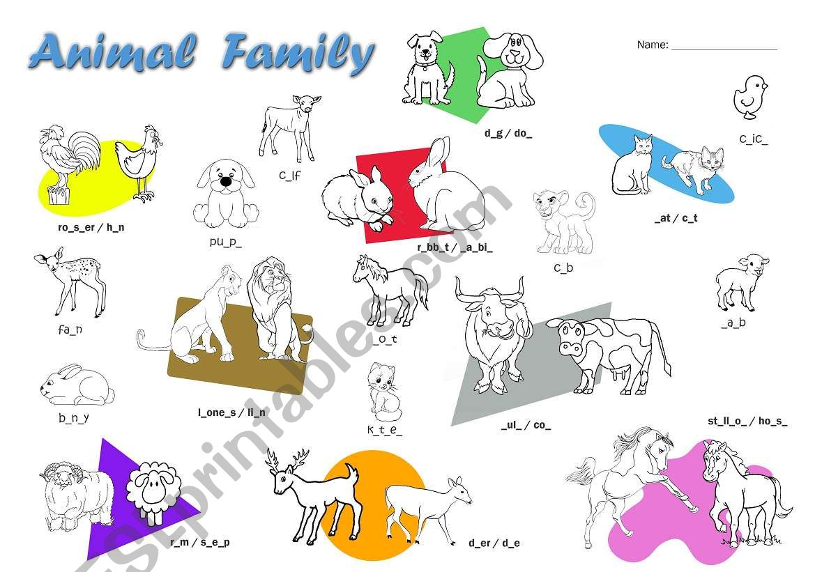Animal Family Vocabulary