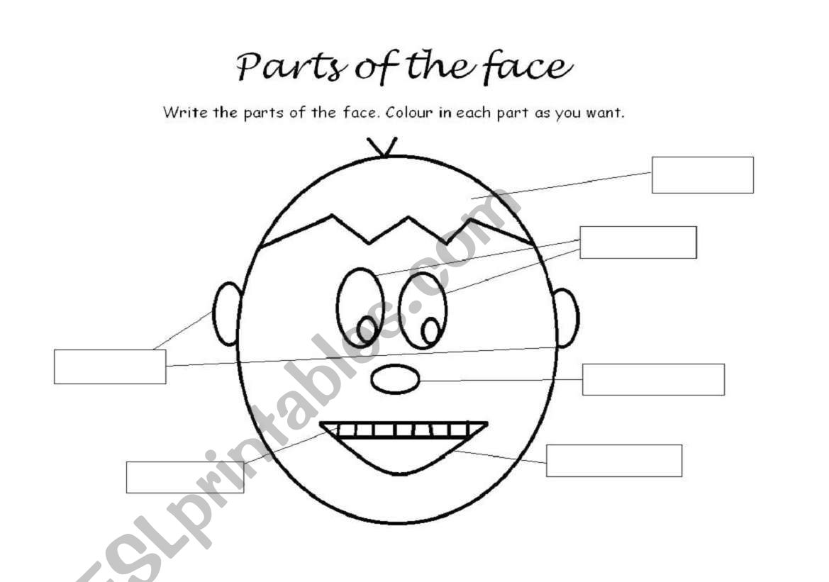 Body Parts German Worksheet