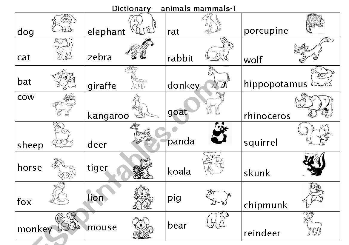 Animal Mammals Pictures