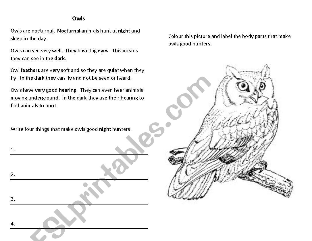English Worksheets Owl Vocab