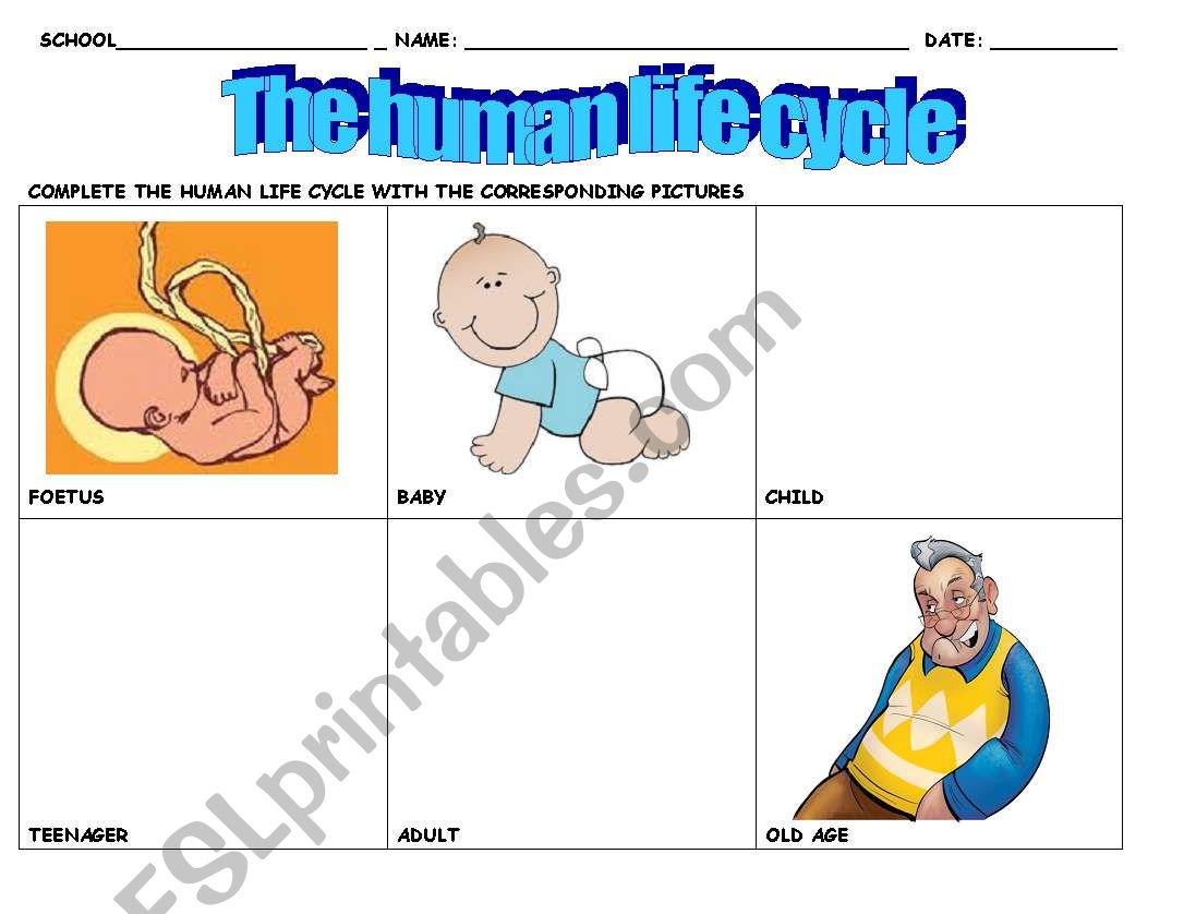 English Worksheets The Human Cycle Of Life