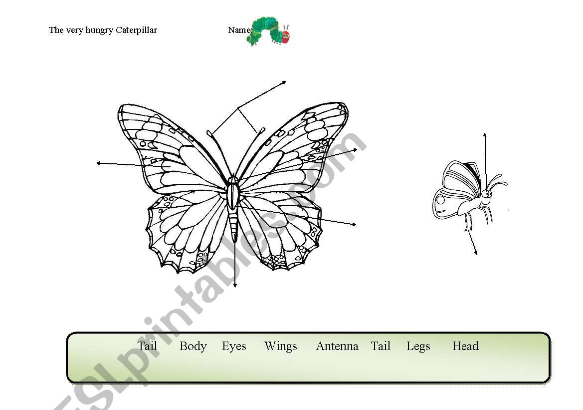 English Worksheets Butterfly Parts Of The Body Related To The Very Hungry Caterpillar