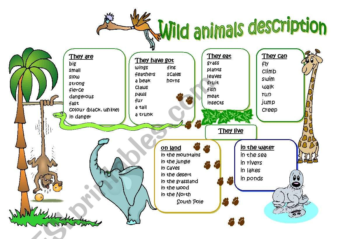 Wild Animal Description