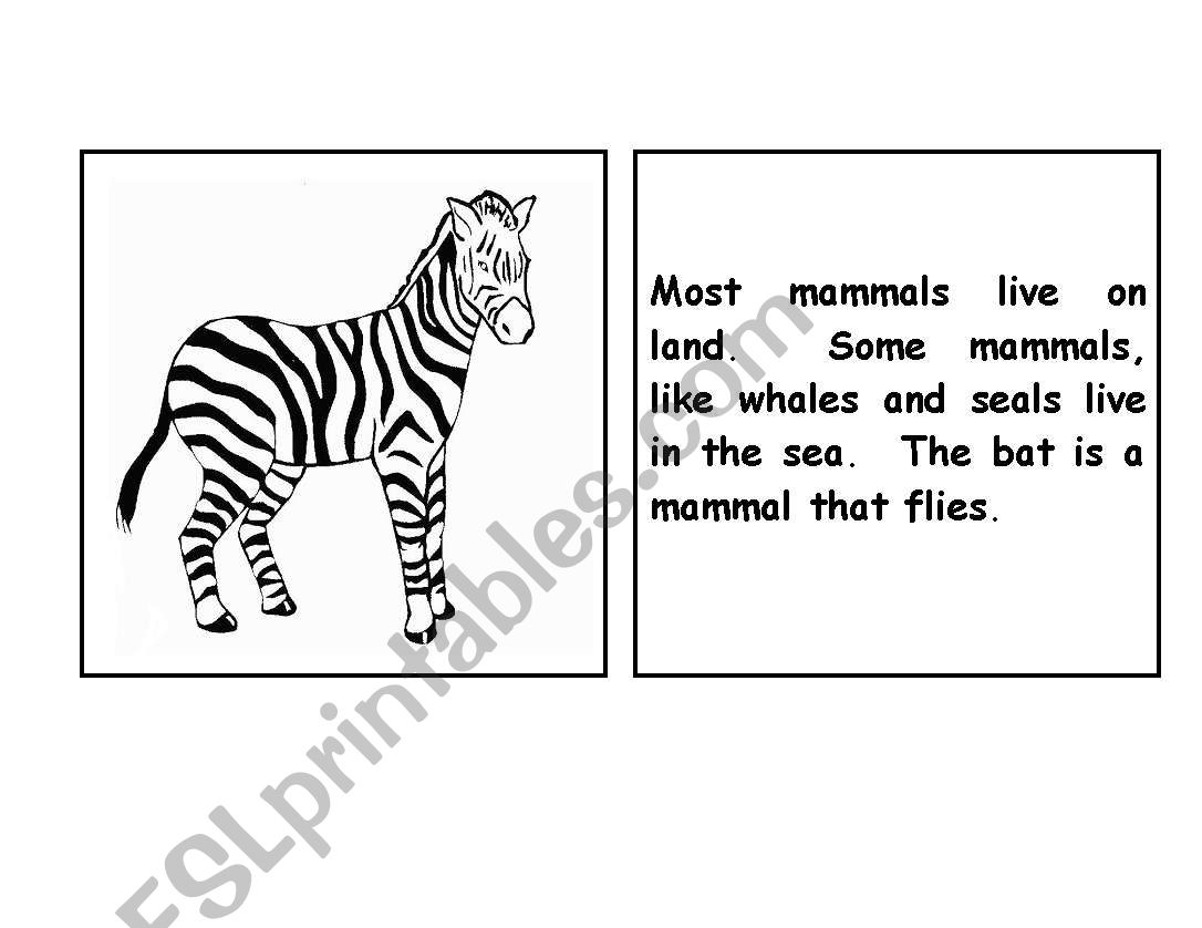 English Worksheets Zebra Parts Of The Body Booklet