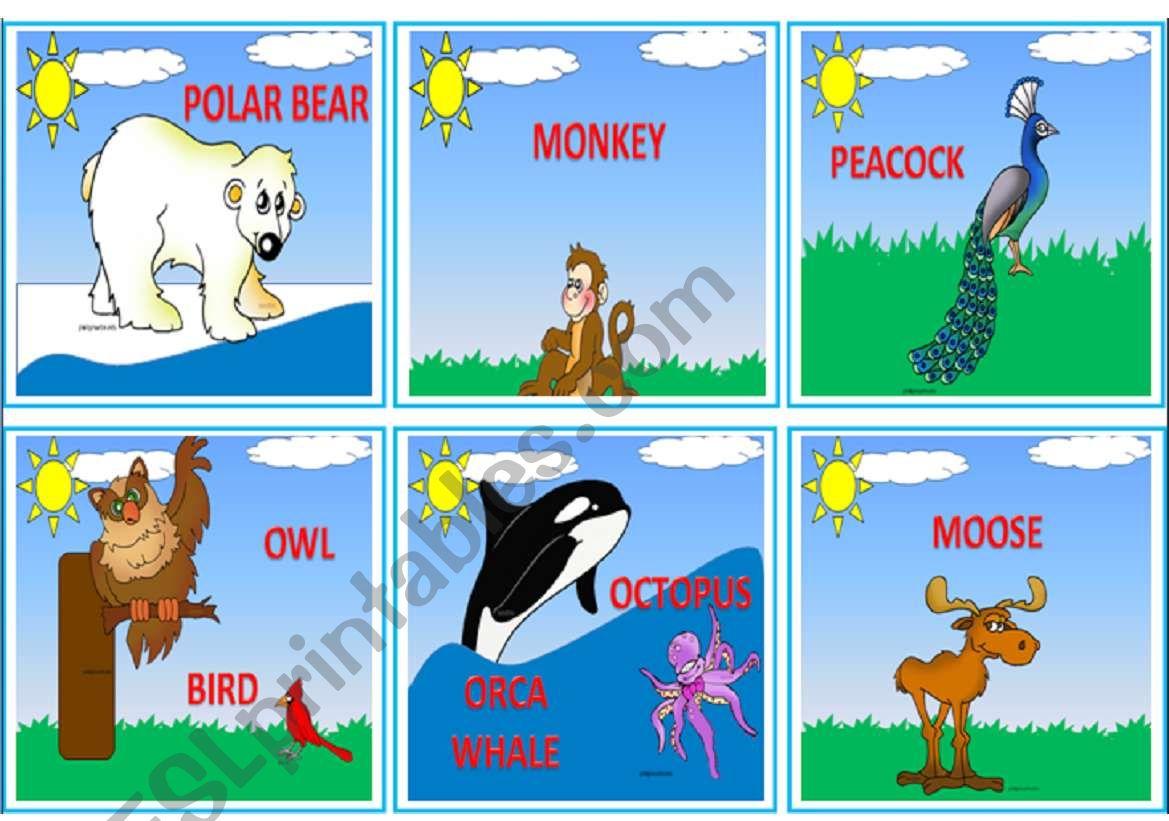 Wild Animals Flashcards 1 3