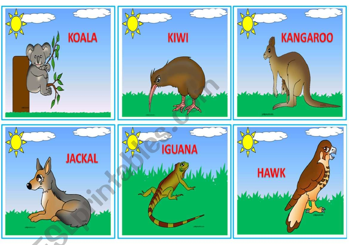 Wild Animals Flashcards 3 3