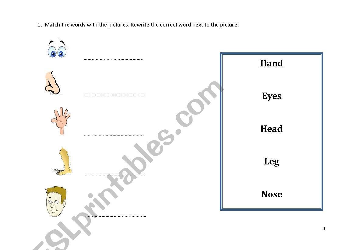 English Worksheets Body