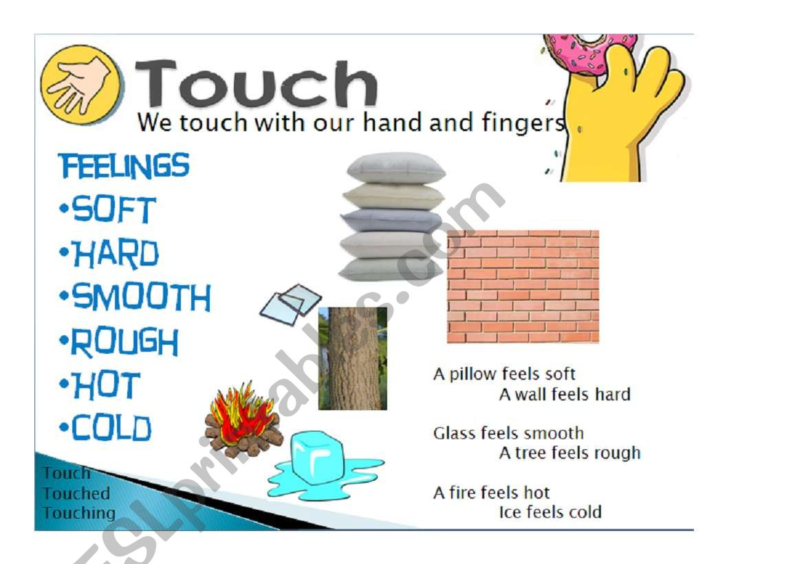 Five Senses Touch 5 5