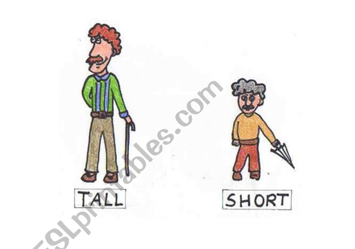 English Worksheets Opposites Tall