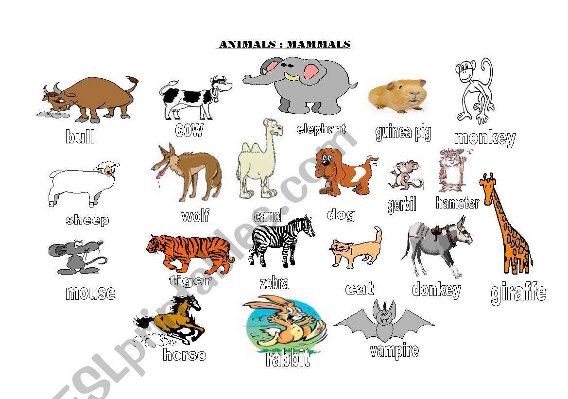 Animals Groups